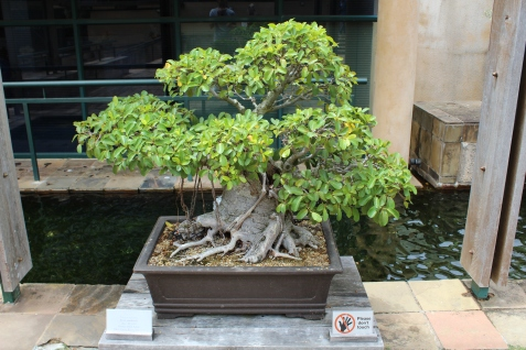 Bonsai Baum