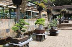 Bonsai Bäume