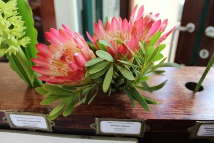 Protea repena