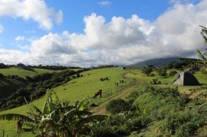 Wildfarm