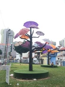Regenschirmbaum