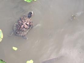 Schildkröte und Fisch