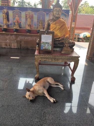 Buddah im Tempel