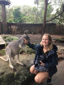 Känguru im Taronga Zoo
