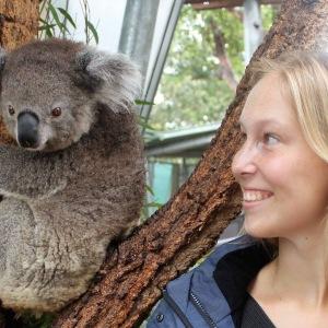 Koala im Taronga Zoo