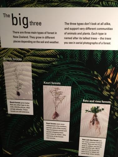 Baum Informationen über Bäume in NZ