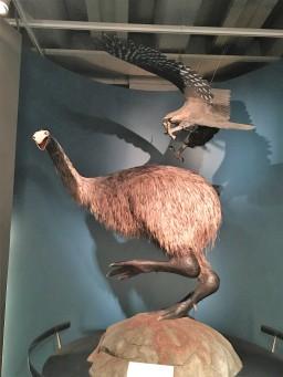 Nachgestellter riesen Vogel und größter Adler der Welt. Kannst du Dir vorstellen, dass es solche Vögel mal in Neuseeland gegeben hat ?