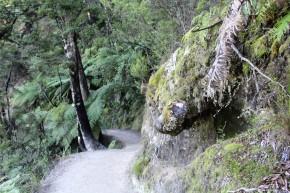 Der Weg durch den Abel Tasman National Park