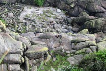 Seehunde