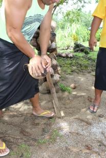 Kokosnüsse knacken