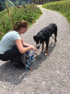 Wasser teilen mit dem Hund