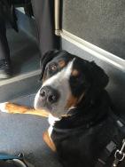 Unser Hund Bruno
